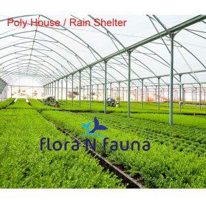 Poly House - Rain Shelter